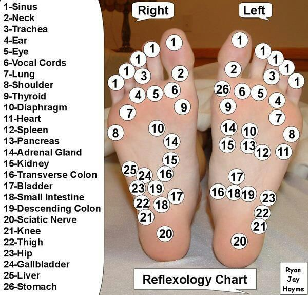Reflexology is the practice of applying pressure to the feet and hands utilizing specific thumb, finger and hand techniques without the use of oil, cream or lotion based on a system of zones and reflex areas that reflect an image of the body on the feet and hands with a premise that such work effects a physical change in the body.