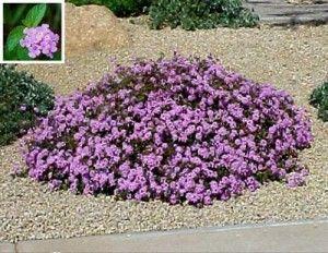 Gilbert Arizona Landscaping Plants List. Drought tolerant shrubs.