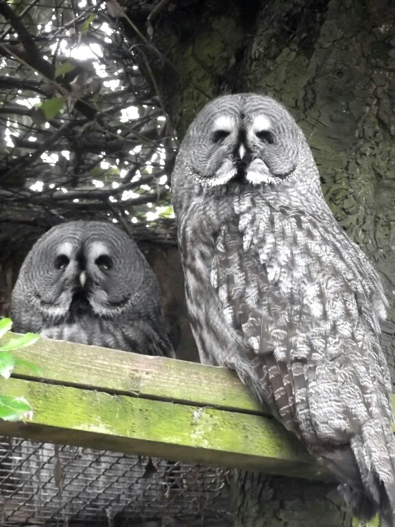Paradise park, Hayle, Cornwall. May just need to visit here because they have owls!! :D