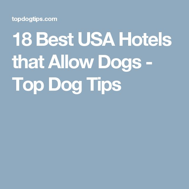18 Best USA Hotels that Allow Dogs - Top Dog Tips