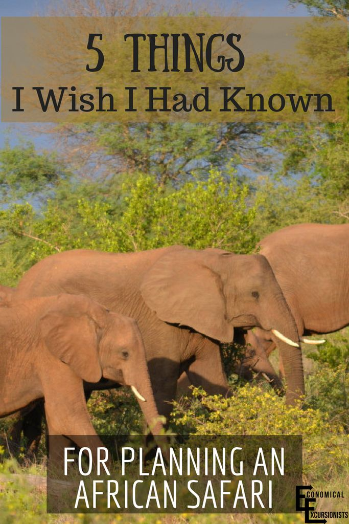 How To Plan An African Safari: Planning a safari was seriously overwhelming! I wish I had known these 5 things when I was planning to have cut down on the stress!