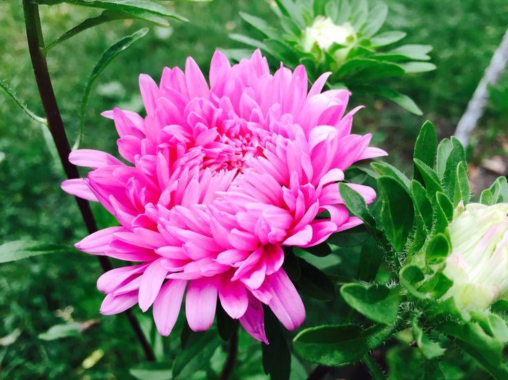 Flower from garden