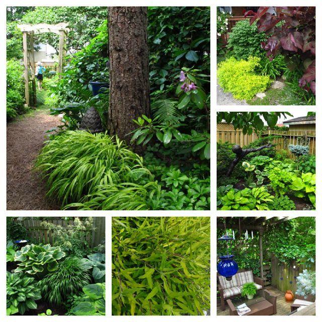 Toronto Gardens: A hosta-lover's garden