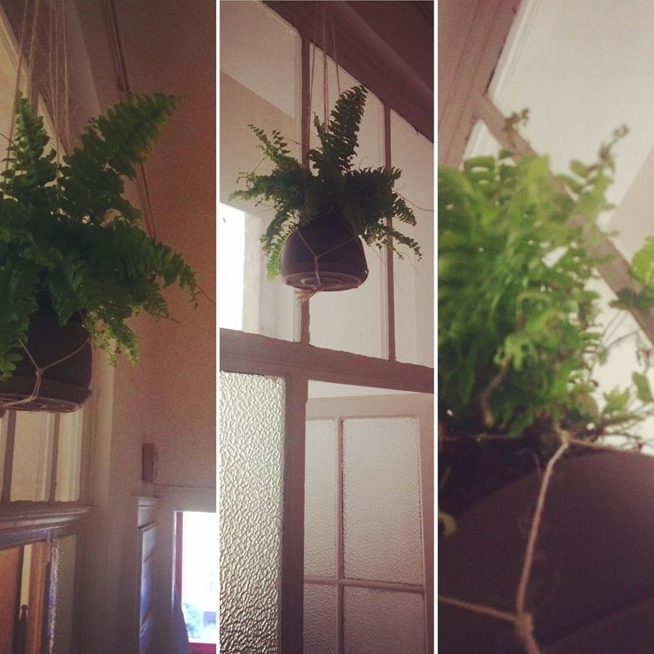 Bracken height. #bracken #hall #plant #hangingplant #hanging #plant #plants #greenhome #eco #greenandfresh #homedesign #height #highceiling #resistingpets #resistingdogs