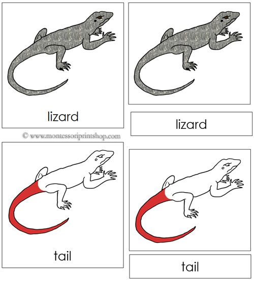 110 Best Zoology Nomenclature (in Red) Images On Pinterest