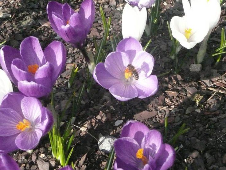 Wiosna w naszym ogrodzie :)