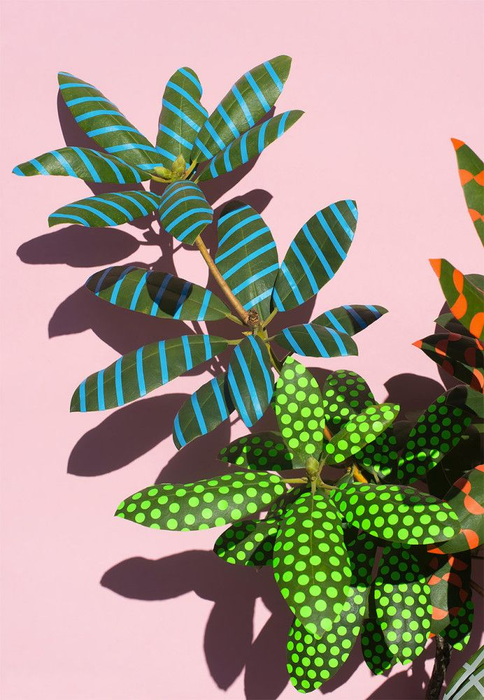 Art Design Projects: Wonderplants by Sarah Illenberger