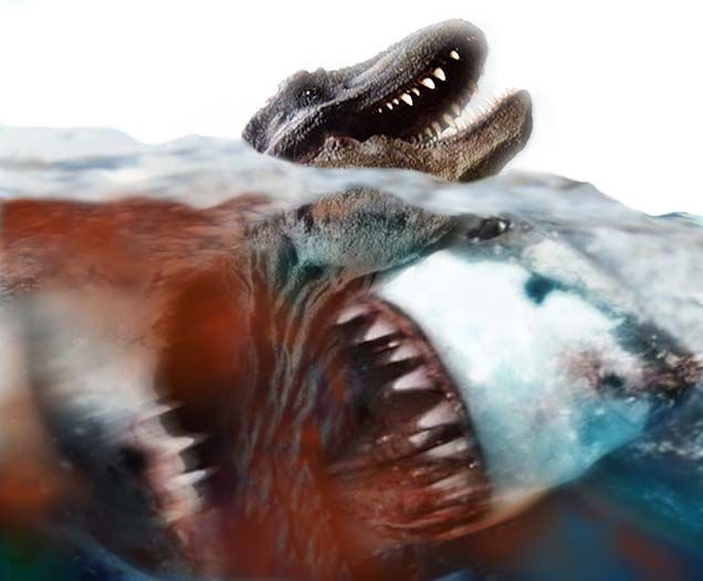 megalodon shark pictures | ... share to twitter share to facebook labels megalodon shark shark fish