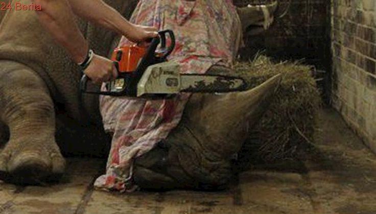 Seorang Pemburu Cula Badak Diganjar Vonis Penjara 20 Tahun