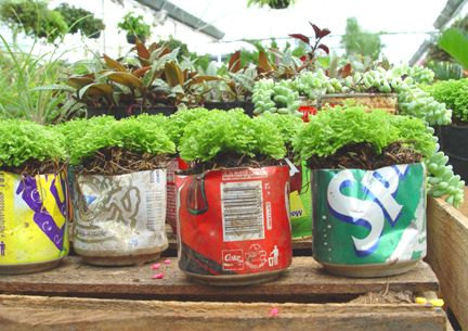 Drink cans are great for starter plants!  Gloucestershire Resource Centre  http://www.grcltd.org/home-resource-centre/