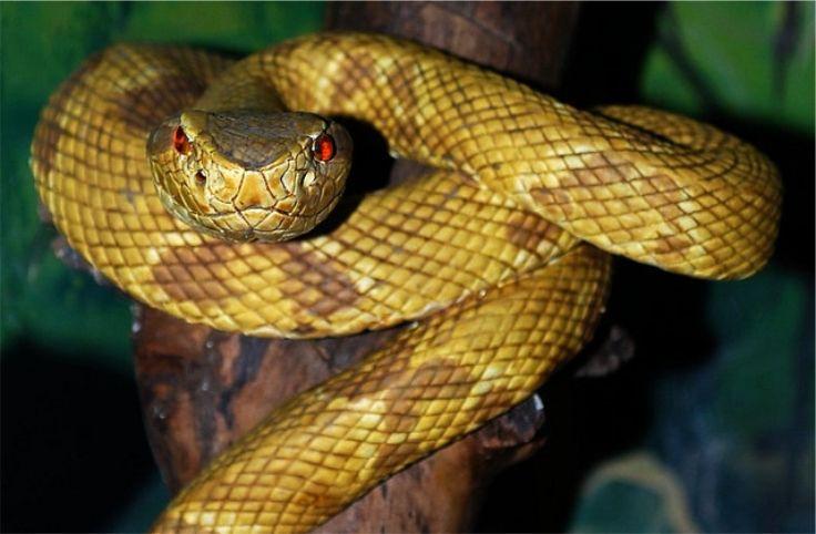 Полуторагодовалый мальчик, поймал и до смерти покусал змею, которую нашел во дворе своего дома в Рио-Гранде, Бразилия