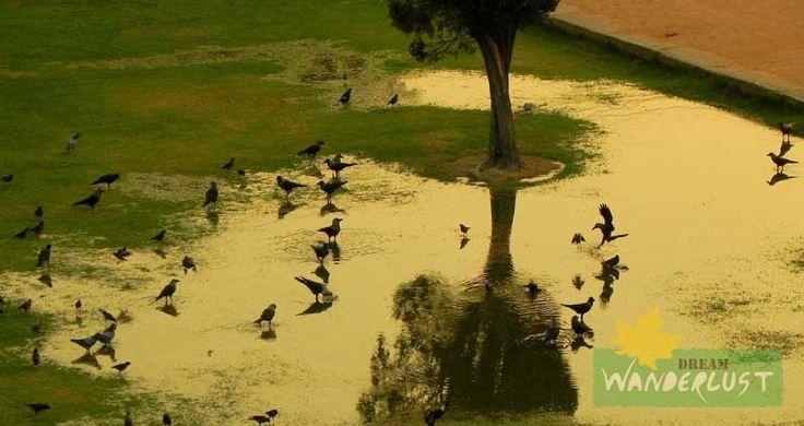 Crow festival  Photo Credits: Saikat Das    http://www.dreamwanderlust.com/rainy-days.php