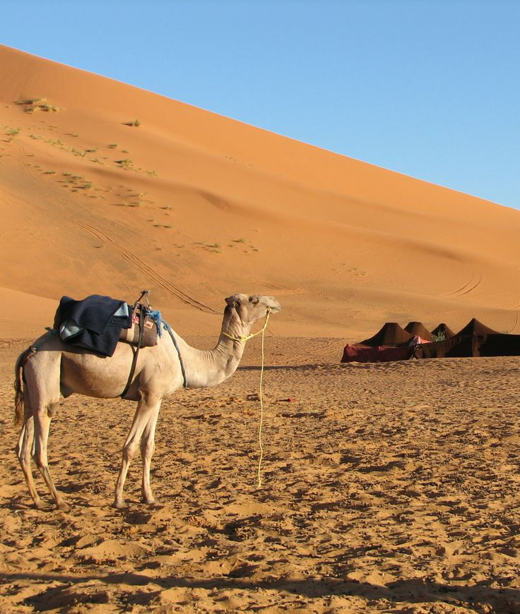 The bedouins a nomadic race from the deserts of the arabian the bedouins a nomadic race from the deserts of the arabian peninsula are known for the distinct tents in which they sleep click through to lear sciox Images