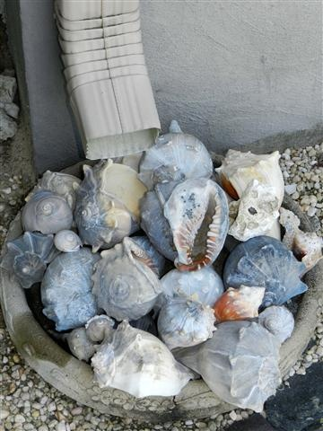 Another idea for that unsightly rain down spout.  Use a shallow planter (or in this case an old cracked cement bird bath) and fill it with shells for a decorative way to disperse the water.