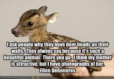 animal welfare quotes - Google Search – More at http://www.GlobeTransformer.org