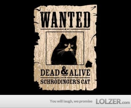 Too funny!: Schrodinger Cat, Cats, Schrödinger Cat, Schrode Cat, Funny Cat, Schrodingers Cat, Big Bangs, Beckham, Schrodingerscat