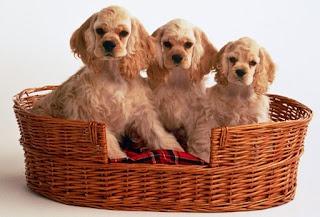 Wholesale pet supplies - Discount Pet supplies - Vet Supplies: Types of Necessary Discount Pet Supplies Available Online