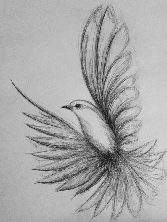 Flying bird drawing drawing sketches in 2019 çizim Easy Pencil Drawings, Art Drawings Sketches Simple, Bird Drawings, Cute Drawings, Drawing Ideas, Drawing Drawing, People Drawings, Disney Drawings, Drawing Tips