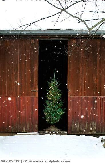 christmas in the barn.  No Words..... I just love this simply snow scene of the single Christmas tree and the barn doors.
