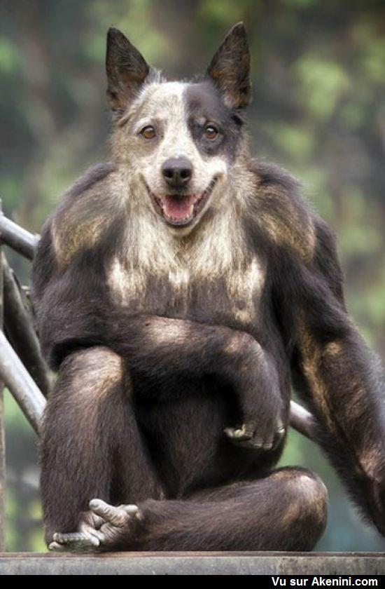 les 25 meilleures id es concernant animaux hybrides sur pinterest l hybride animaux tranges. Black Bedroom Furniture Sets. Home Design Ideas
