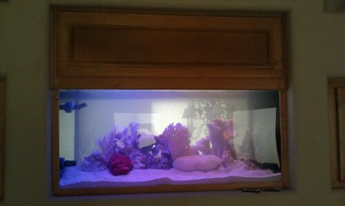 254 Best Aquariums With Style Images On Pinterest