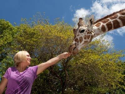 7 best Naples Zoo images on Pinterest Caribbean Lwren scott and