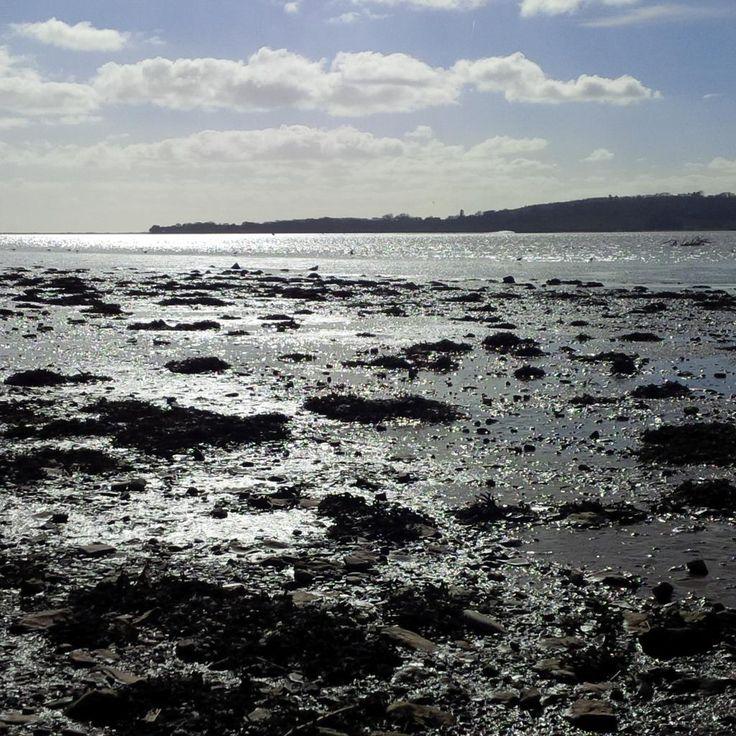 Exe Estuary - below the Goat Walk, Topsham, March 2015