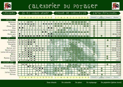Calendrier du potager activit s pinterest - Association des legumes au potager ...