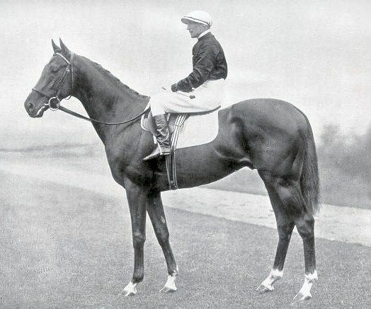 Hyperion (18 April 1930 – 9 December 1960) was a British bred Thoroughbred, a dual classic winner and an outstanding sire. Owned by Edward Stanley, 17th Earl of Derby, Hyperion won £29,509 during his career - a considerable sum at the time. His victories included the Epsom Derby and St. Leger Stakes. He was the most successful British-bred sire of the 20th century and six times champion sire of Great Britain between 1940 and 1954.[1]