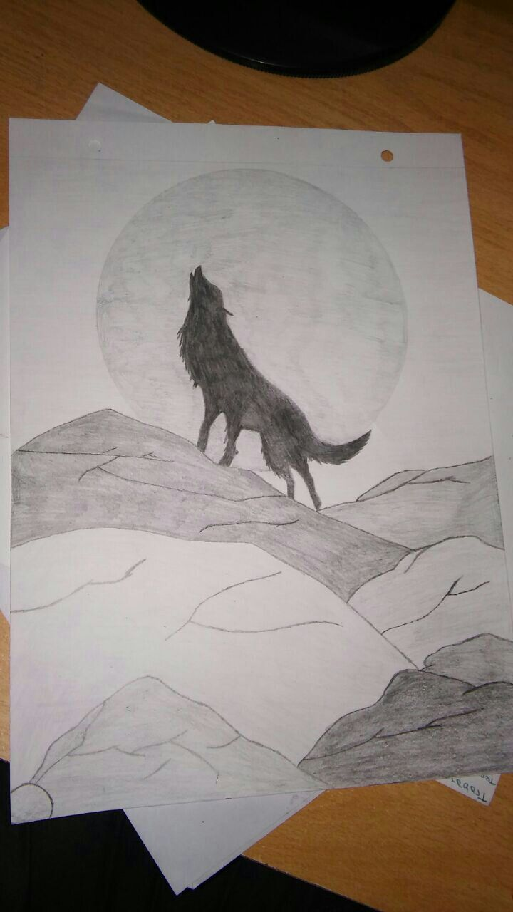 White Black And Gray Wolf Drawing In 2020 Wolf Drawing Drawings