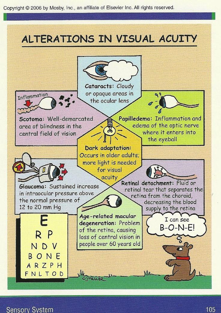 17 best Sensory System images on Pinterest | Nursing schools ...