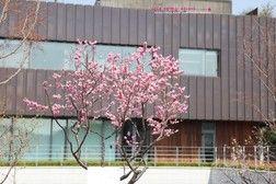 * 아름다운 꽃이 만발한 서울파트너스하우스