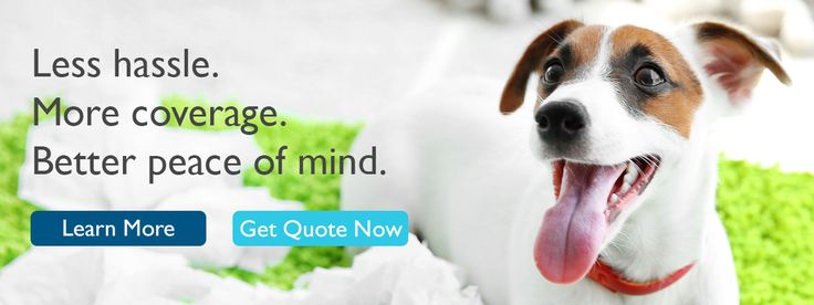 PetFirst Pet Insurance for Dogs and Cats