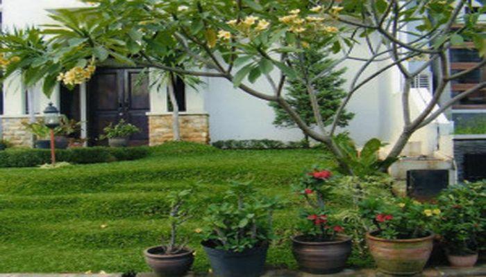 Banyak manfaat yang bisa didapat dari menanam pohon di rumah sendiri. Tak hanya untuk kesehatan fisik saja, taman juga memiliki dampak positif bagi mental seseorang. Oleh karena itu, para peneliti menyarankan agar setiap rumah memiliki taman