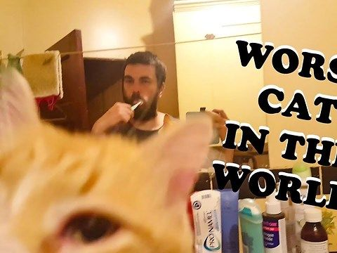Watch as my lovely Cat Troy attempts to help me brush my teeth, because he is the worst cat in the world.<br><br>Outro song totally belongs to me and my amazing voice, to purchase the song Troy Is The Worst Cat In The World, Please send 5$ to me. Yes, a whole 5$ too, not one of those half 5$; I'm on to you!