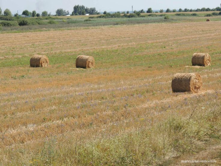 Views from the train, fields in Romania