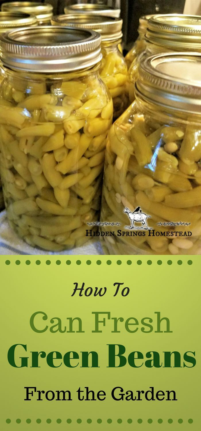 Home Canned Green Beans   Homesteading for beginners ...