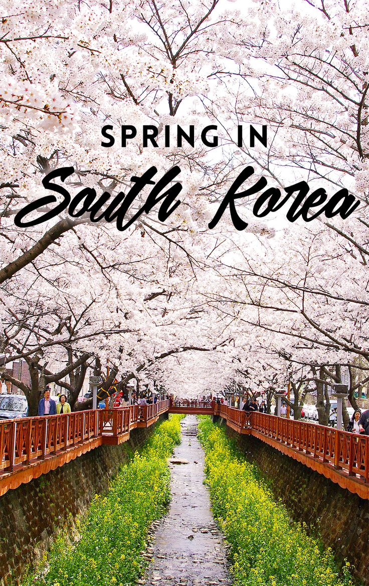 Join the festivities this spring as South Korea dresses in pink! See the gorgeous cherry blossoms, enjoy the vibrant atmosphere, and look forward to brighter and warmer days ahead.