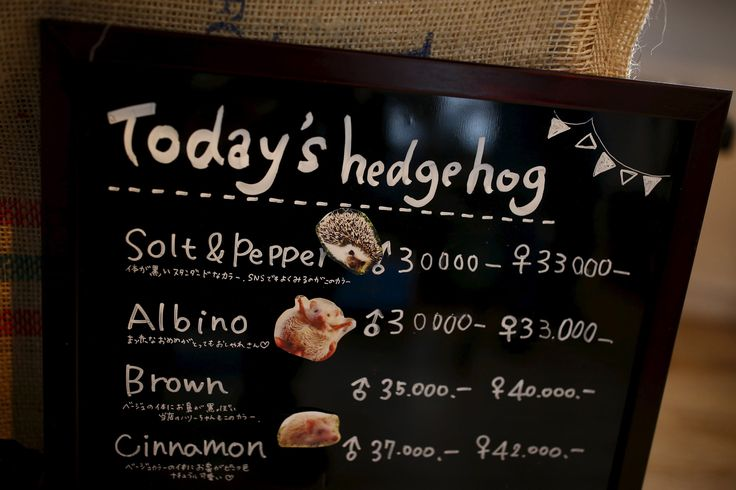 A board shows a selection of hedgehogs for sale at the new animal-themed cafe, which has 20 to 30 hedgehogs of different varieties. Customers have been lining up to play with the prickly mammals, which have long been sold in Japan as pets. The cafe's name Harry alludes to the Japanese word for hedgehog, <em>harinezumi</em>. | REUTERS