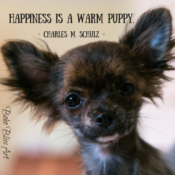 Charles M Schulz Quote Happiness Is A Warm Puppy Dog Quote Wall