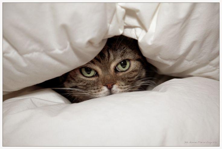 ...unter Decken verstecken... von Heike Meßemer