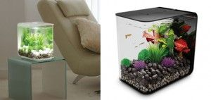Best 25 Nano Aquarium Ideas On Pinterest Freshwater