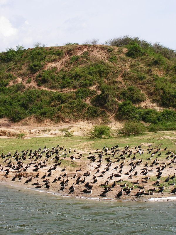 Uganda, NP Queen Elizabeth, Kanál Kazinga, Ráj vodního ptactva