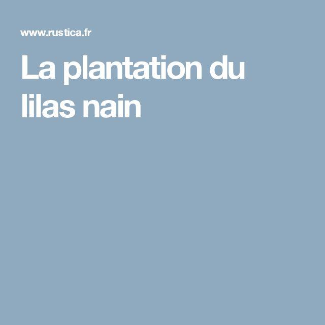 La plantation du lilas nain