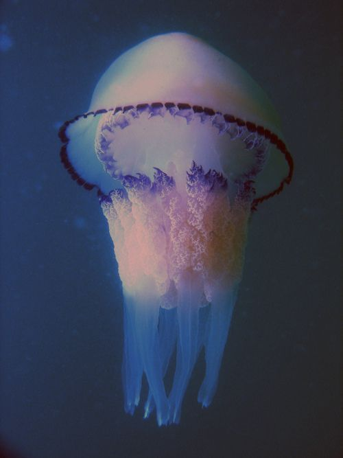 Jelly fishes are pretty but dangerous. Careful with what you put yourself into. It may be pretty but it kills