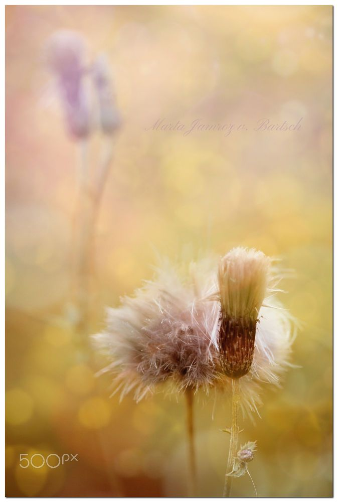 In the Midday by Marta J. V. Bartsch on 500px