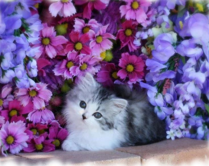 Adorable Kitten In The Flowerbed