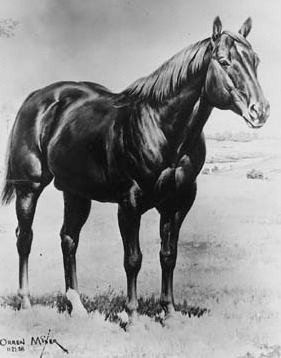 WIMPY---- P-1 1937-1959 double-bred Old Sorrel achieved everlasting recognition in the world of Quarter Horses by being awarded the number 1 in the AQHA registry.