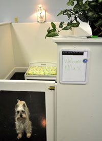 Dog boarding and Doggie Daycare in Ocala Florida at Cassie's Closet