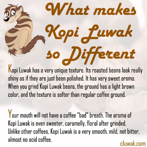 Why Kopi Luwak is so different? This image says it all...